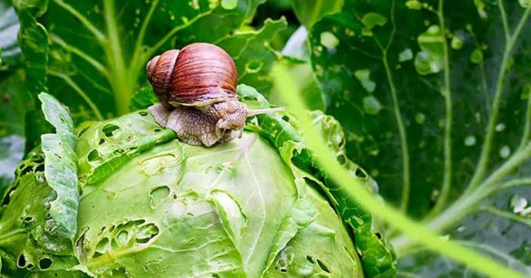 How-to-Ban-Snails-and-Slugs-from-Your-Garden