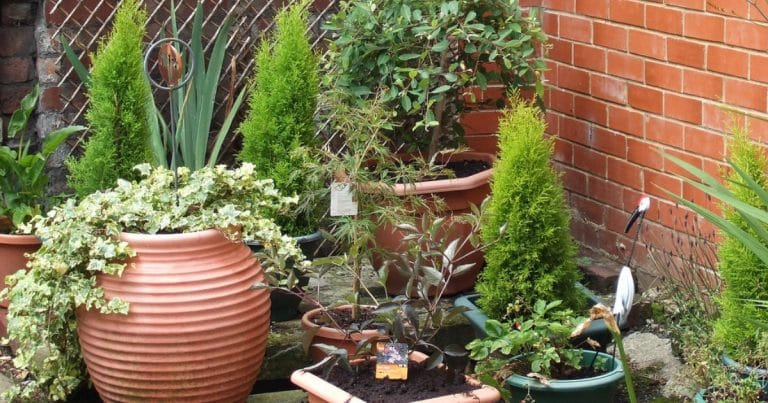 garden-831995_1280