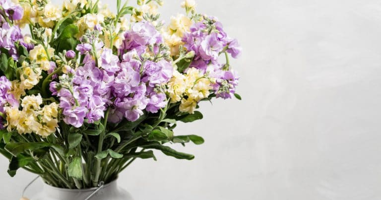 Bouquet of lilac and lemon color flowers gillyflower in grey water can