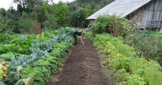 3 общие ошибки начинающих садоводов-огородников при планировании своей деятельности