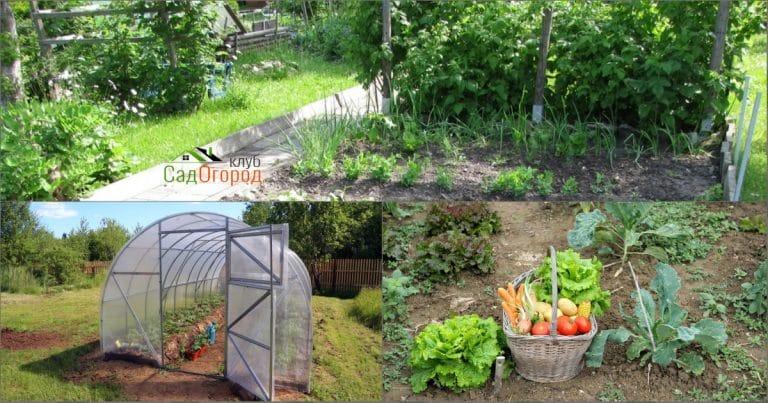 Теплицы и огороды