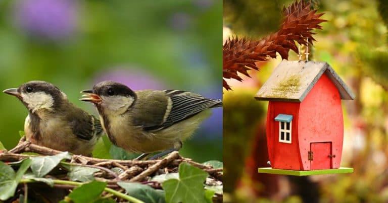 bird-861785__340