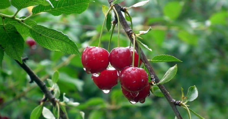 fruit-3235152_960_720