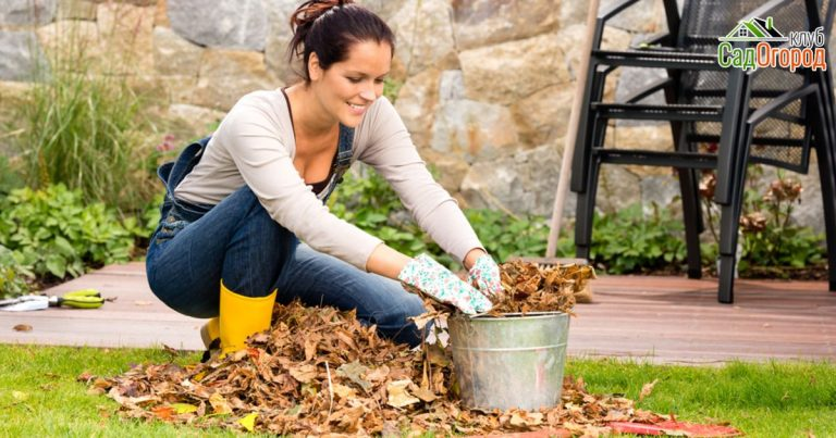 женщина собирает в ведро сухие листья