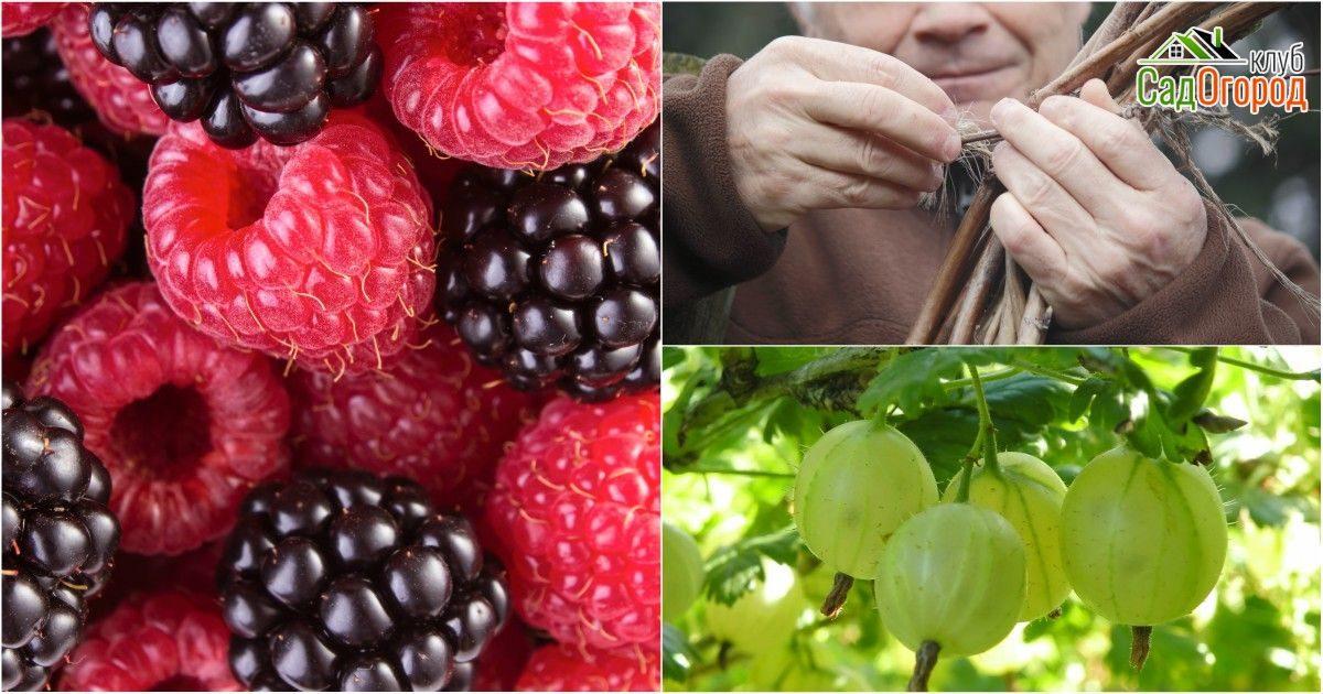 Как подготовить плодовые деревья и кустарники к зиме