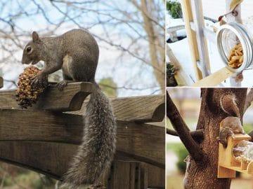 9-Squirrel-Feeder-DIY-Ideas-For-The-Garden2