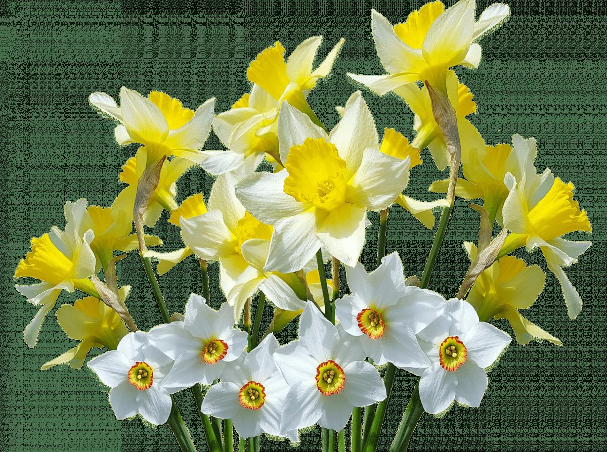 картинки весенние цветы прозрачные полной чаши