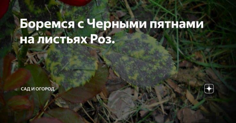 134666_8601.jpg