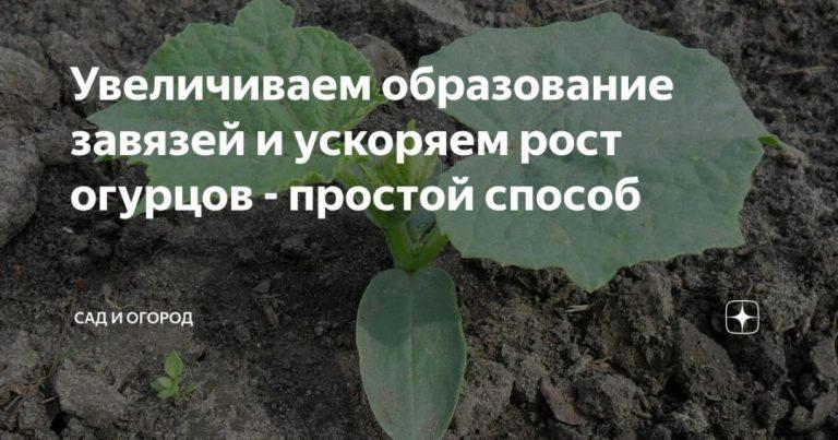 135000_11072.jpg