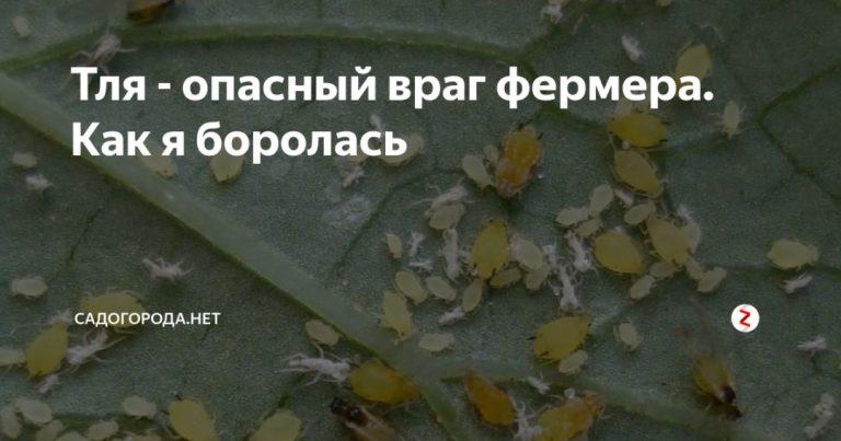 135032_17818.jpg