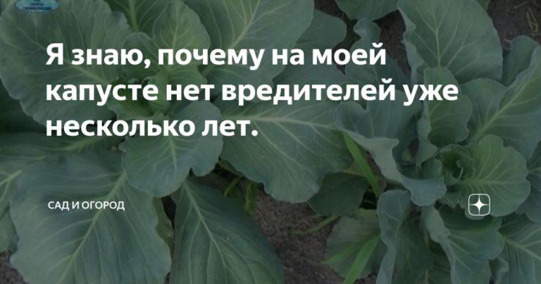 136532_40704.jpg
