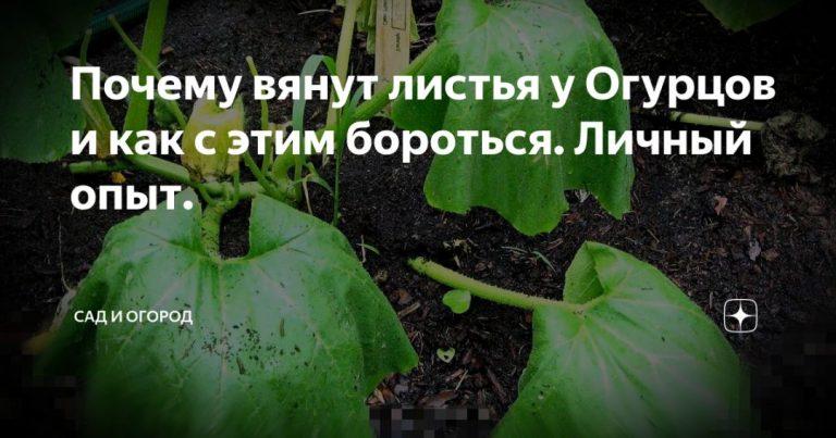 136750_62643.jpg