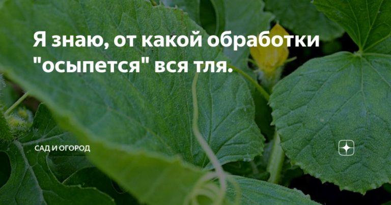 136814_58087.jpg