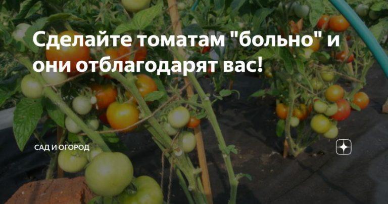 136934_98880.jpg