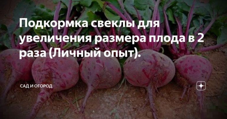 137164_56497.jpg