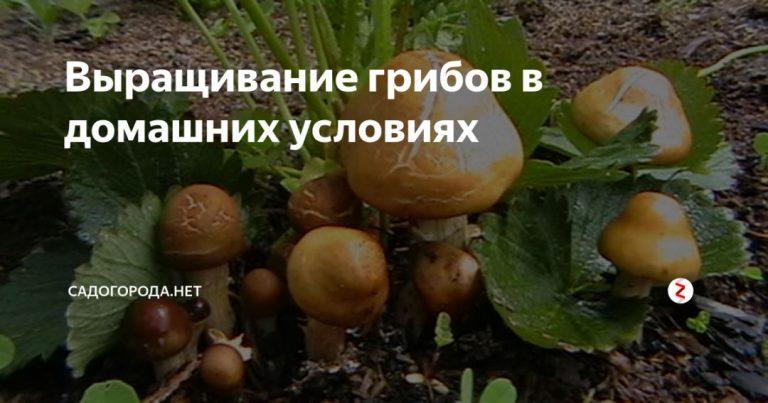 137184_94997.jpg