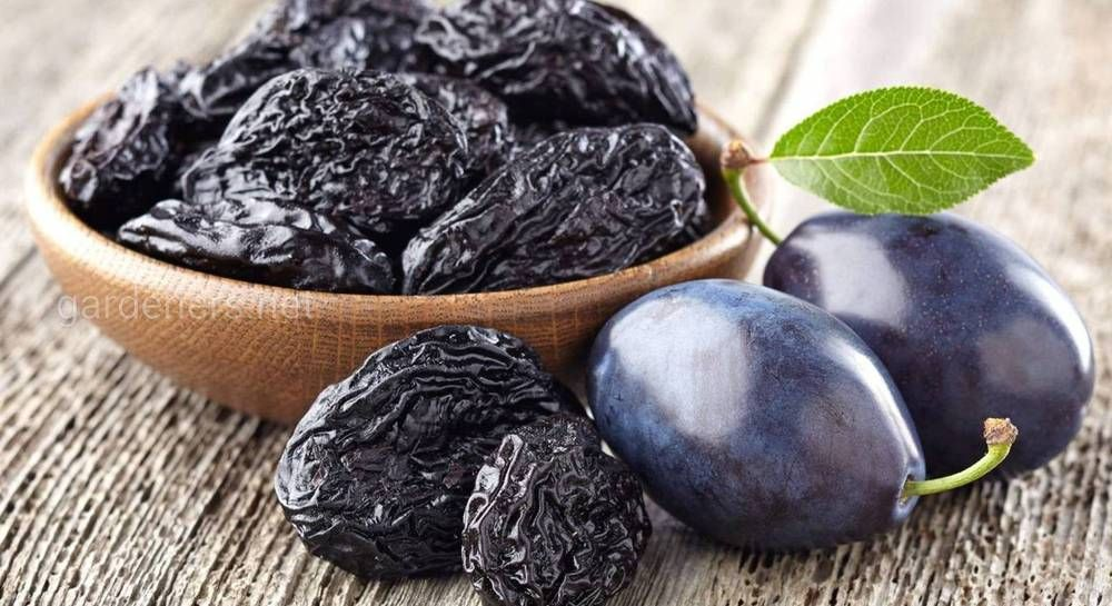 Сорта сливы для сушки чернослива