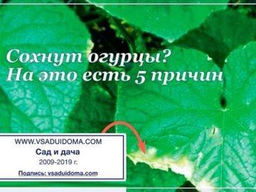 345683_81502.jpg