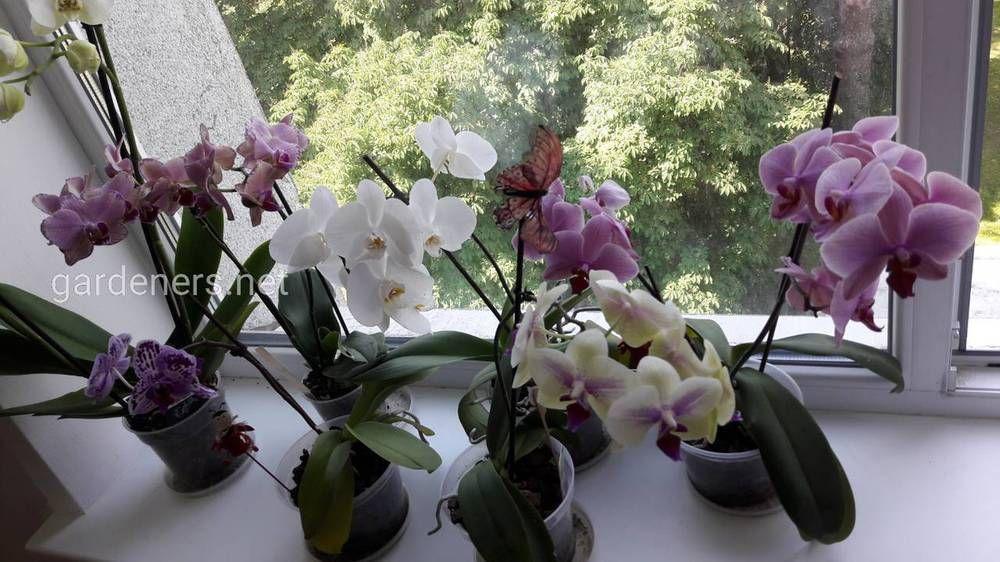 Плесень на орхидее что делать